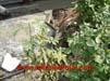 pavimientos-suelo-albaniles